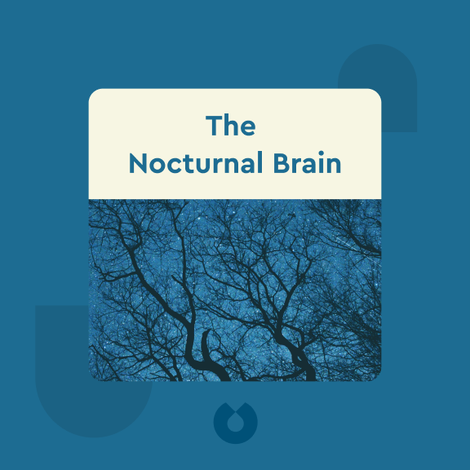 The Nocturnal Brain von Guy Leschziner